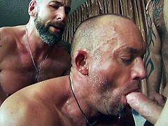 Timfuck 2,hot hairy hunks.