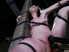 Brunette girl gets tied up. Then the guy fingers her ass and pussy. After that she also gets her tits clothespinned and both holes toyed.