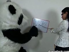 Panda's such a bad student! His teacher is very unhappy, panda didn't even do his homework. After a while the sexy teacher decided to give up maths and teach panda bear another lesson. Her big assortment of kinky sex toys is really impressive, and the filthy chick knows how to use them. However, none of her fun sex toys is as big and arousing as panda bear's huge strapon. After a steamy and fun fucking session the strict teacher is finally happy with her student. Good job, panda bear, fucking A!