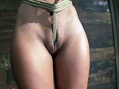 The sexy brunette Skin Diamond is going to be tied up in a way the ropes bury inside and around her snatch in this BDSM video.