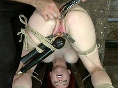 Positioned upside-down, with laundry pliers and a vibrator on her pussy the sexy redhead Penny is now getting hooked, literally! Our executor is inserting a big metal hook deep in her tight anus and makes burst with pleasure&pain. Now let's see what else awaits Penny!