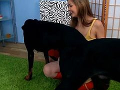 The hot amateur teenie Spunky Bee plays with her dogs at home. Then she shows some of her other toys and strips her clothes to show her titties!