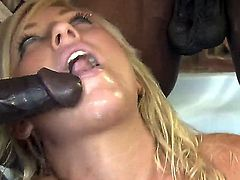 Tempting young looking big ass blonde Heidi Hollywood with pierced tongue and big fake tits gives head to bunch of black stud with rock hard monster cocks in rough gang bang.