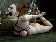 This petite sex slave Iona Grace is being tortured pretty hard. She loves being painsulted with a hook in her ass and with a severe breast bondage!