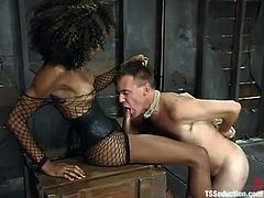 Ebony shemale Mistress Soleli is having fun with Wild Bill in a basement. He torments the dude and then pokes her cock into his mouth and asshole.
