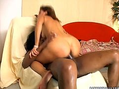 Watch exciting shemale sex tube video. One sex insane brunette hops on big black cock of her shemale girlfriend. She moves her ass fast. Enjoy sex video for free.