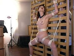 BDSM is what this horny redhead is so passionate about! She loves getting painsulted and being nailed on the wall. Ivy is a bitch, and she is a tough bitch!