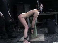 Hot brunette Lavender Rayne allows some guy bind her and put a gag into her mouth. Then the dude plays with Lavender's tight pussy and pulls her by the nipples.