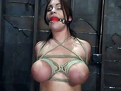 horny and chubby siren Whitney Stevens is being tortured so hard. She gets her mouth ball gagged and the ropes spread her legs for a vibration!