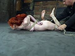 Pleasures from the hogtie will never stop for Calico