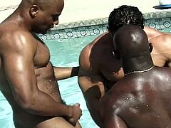 Two black bodybuilders play in the pool until a white stud comes along for them to share their huge cocks with.