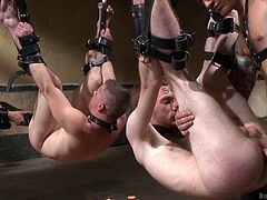 Here we have two gay whores that have been tied up an hanged. These boys form a beautiful duet and it's all our executors merit. At first, they've used powerful ass drilling machine but then, one of the executor decided his dick is better while the other continued to use the machine. well