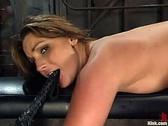 Bald headed stud Mark Davis teasing tied up whore Flower Tucci