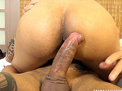 Sexy ladyboy Barbara has a pretty big ass. And this whore of a tranny wants to get her tight hole filled with a big cock. Watch this transsexual slut riding on a dick and moaning with painful pleasure. In several styles, she gets fucked and jerks off on her body.