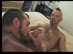 Sliver hairy daddy rammed by hairy stud