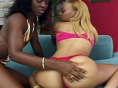 If you like darker women and get into lesbians, you will love this video. Melrose and Ms. Platinum are two older women, who enjoy the look, feel and taste of women. They really enjoy each other's breasts, sucking and licking them, with Melrose licking her own nipples once to tease the viewers.