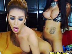 Watch these beautiful shemale bitches as they engage in a hot and awesome fucking. See one hot tranny do a hot blowjob before she gets rammed in the ass as she moans in total pleasure.
