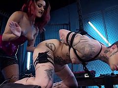 Tattooed beauty Leigh learns that total obedience is absolutely necessary to be a good slave. Bound with leather straps, kneeling with her legs spread wide apart, she tries not to cry out from a mixture of pain and pleasure, when domme Daisy rams a hard dildo in and out of her hairless cunt.