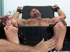 Furry-chested hunk bound and tickled hard relentlessly